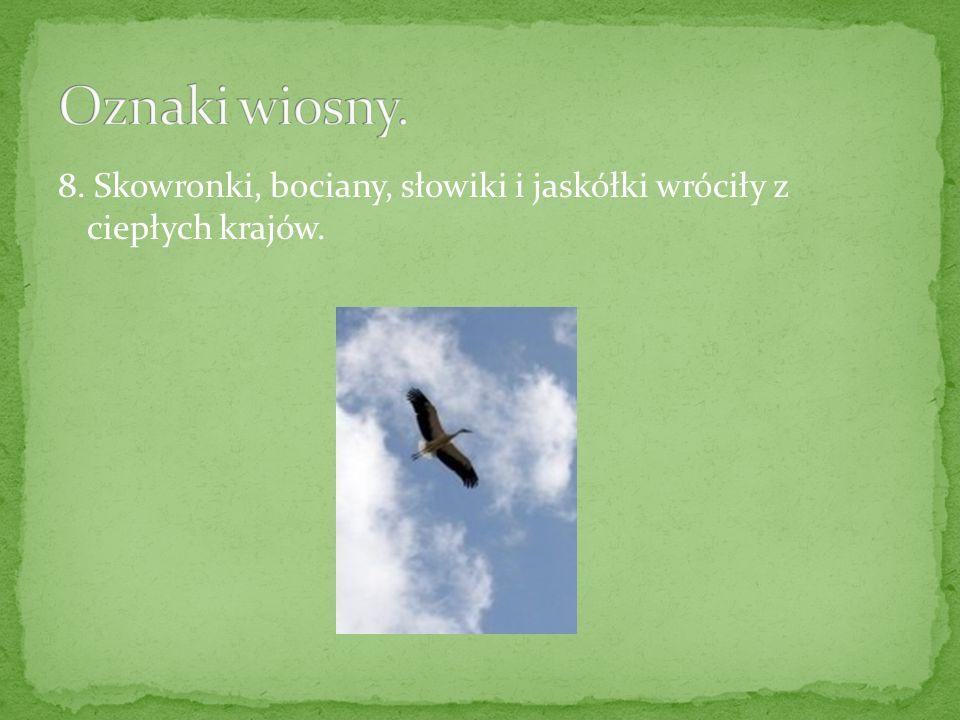 8. Skowronki, bociany, słowiki i jaskółki wróciły z ciepłych krajów.