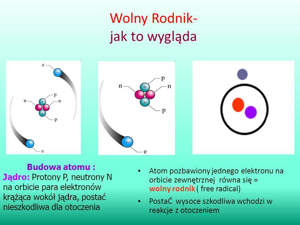 Wolny Rodnik- jak to wygląda Atom pozbawiony jednego elektronu na orbicie zewnętrznej równa się = wolny rodnik ( free radical) PostaĆ wysoce szkodliwa
