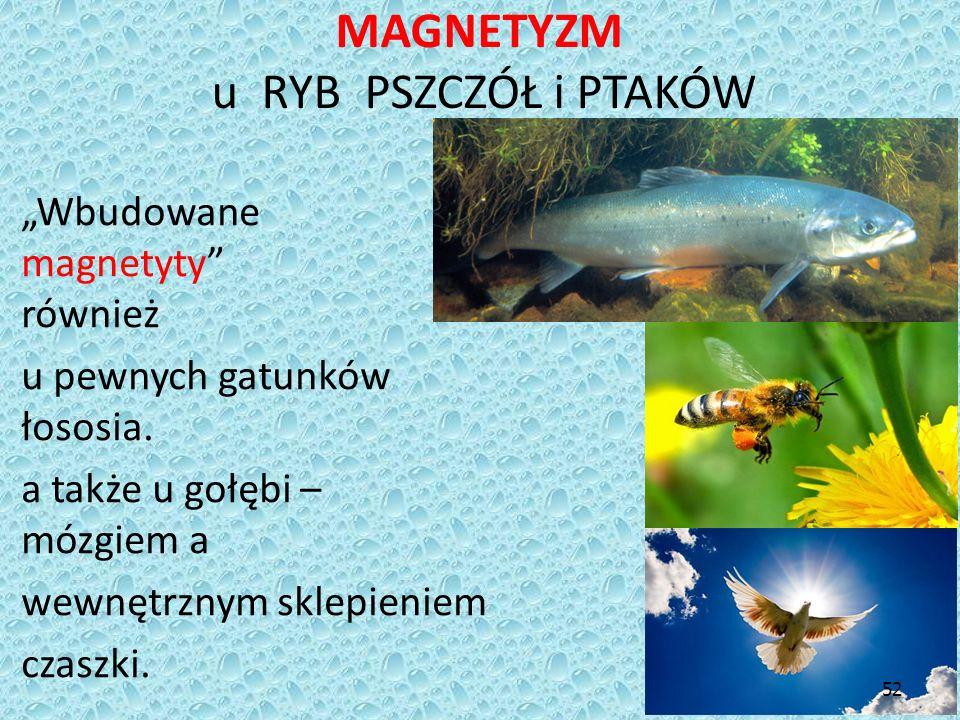 """MAGNETYZM u RYB PSZCZÓŁ i PTAKÓW """"Wbudowane magnetyty"""" wykryto również u pewnych gatunków tuńczyka i łososia. U pszczół, a także u gołębi – między móz"""