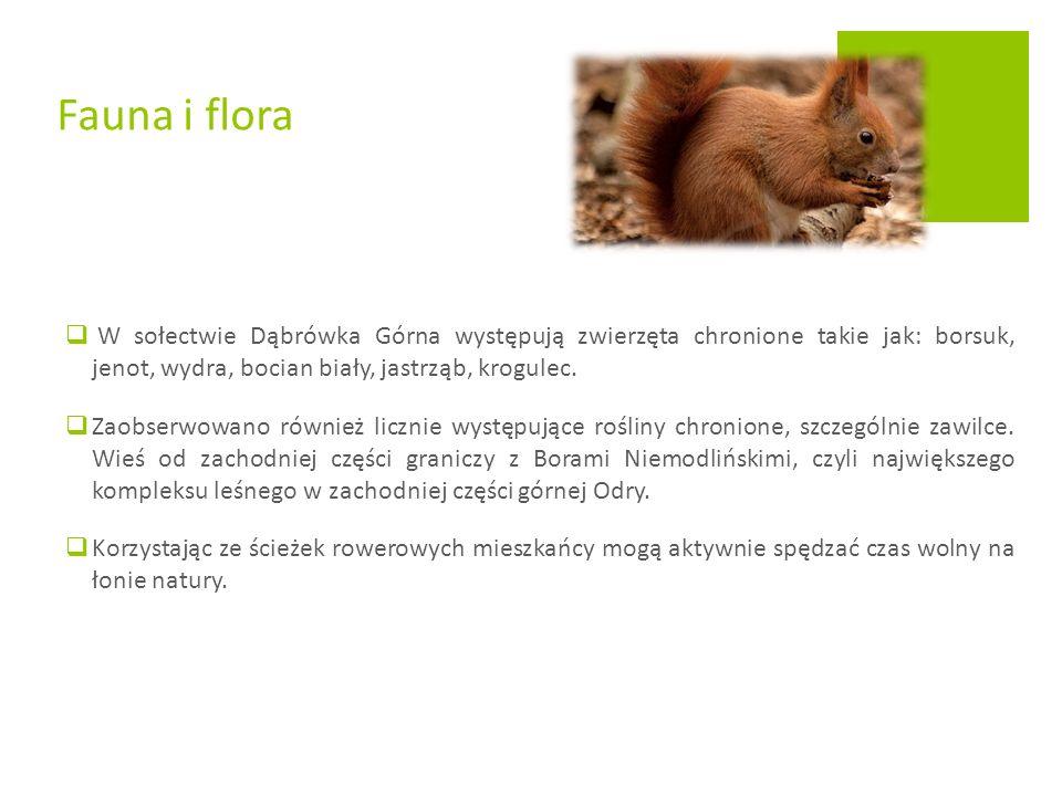  W sołectwie Dąbrówka Górna występują zwierzęta chronione takie jak: borsuk, jenot, wydra, bocian biały, jastrząb, krogulec.