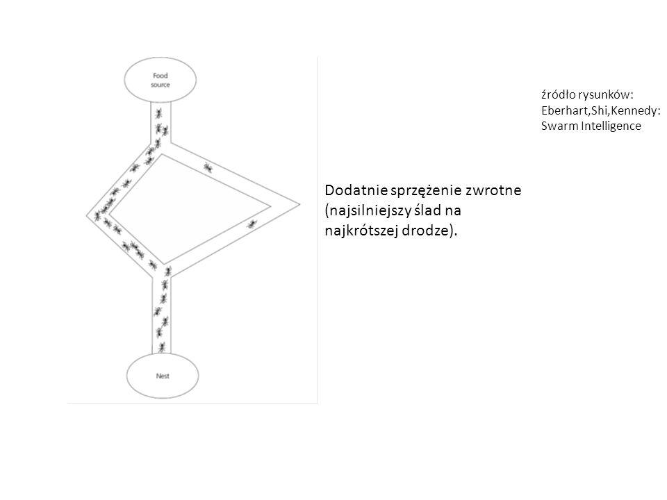 Dodatnie sprzężenie zwrotne (najsilniejszy ślad na najkrótszej drodze). źródło rysunków: Eberhart,Shi,Kennedy: Swarm Intelligence