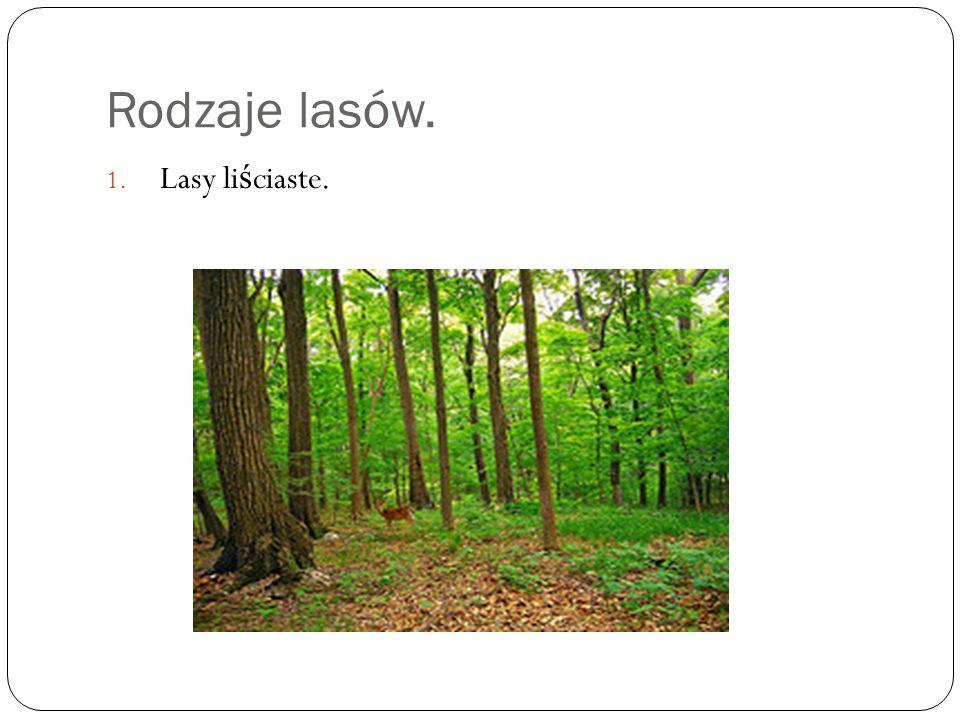 Rodzaje lasów. Drzewa, które rosn ą w lasach li ś ciastych to: D ę by graby klony lipy.