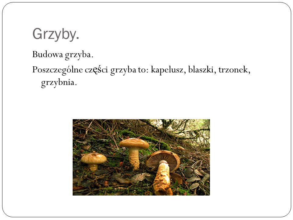 Grzyby.Podział grzybów: 1. Jadalne.