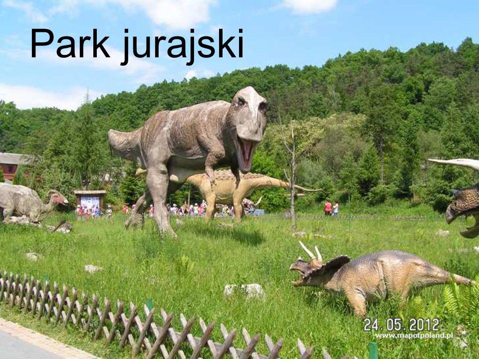 Na wyżynie kielecko – sandomierskiej znajduje się dużo atrakcyjnych miejsc takich jak : Park jurajski