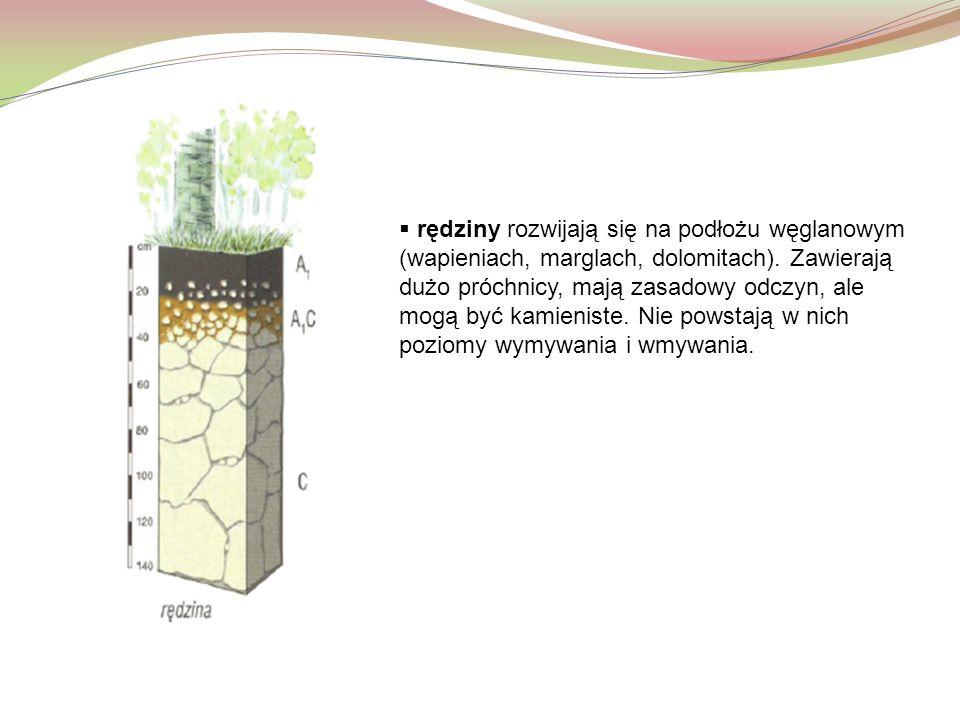  rędziny rozwijają się na podłożu węglanowym (wapieniach, marglach, dolomitach). Zawierają dużo próchnicy, mają zasadowy odczyn, ale mogą być kamieni