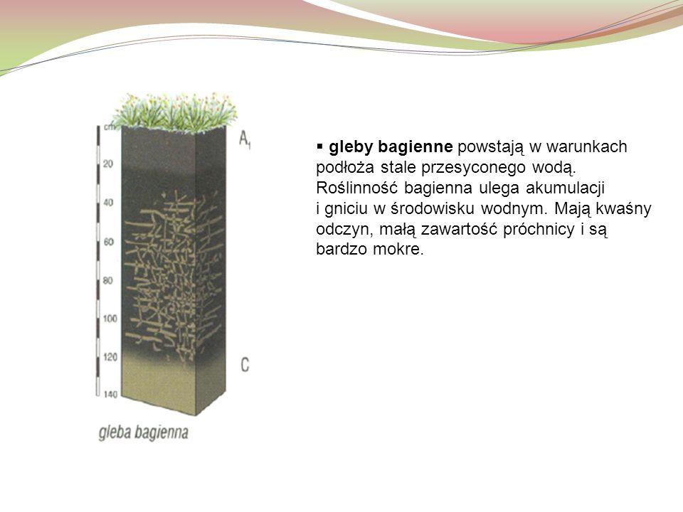  gleby bagienne powstają w warunkach podłoża stale przesyconego wodą. Roślinność bagienna ulega akumulacji i gniciu w środowisku wodnym. Mają kwaśny