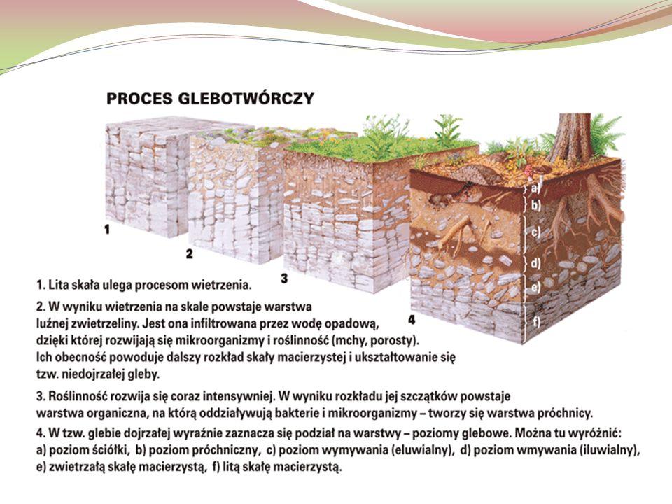 Typy genetyczne gleb 1.Gleby strefowe wykazują ścisłą zależność od klimatu oraz roślinności.
