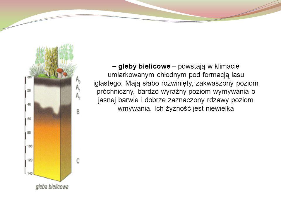 – gleby bielicowe – powstają w klimacie umiarkowanym chłodnym pod formacją lasu iglastego. Mają słabo rozwinięty, zakwaszony poziom próchniczny, bardz