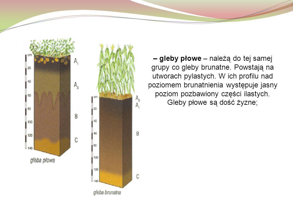 – gleby płowe – należą do tej samej grupy co gleby brunatne. Powstają na utworach pylastych. W ich profilu nad poziomem brunatnienia występuje jasny p