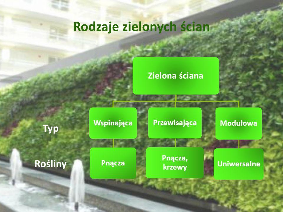 Rodzaje zielonych ścian Rośliny Typ Zielona ściana Wspinająca Pnącza Przewisająca Pnącza, krzewy Modułowa Uniwersalne