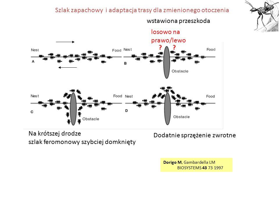 Algorytm kolonii mrówek dla problemu komiwojażera 1W metodzie: grupa przemieszczających się wędrowców symulujących zachowanie mrówek 2Preferowany szlak o największym nasileniu feromonu 3Wzrost feromonu na najkrótszej trasie 4Komunikacja między mrówkami przez szlak feromonowy 5Strategia najbliższego sąsiada włączona w algorytm (mrówki kierują się nie tylko feromonem, ale również starają się dostać do miast raczej bliżej niż dalej położonych) Założenia: Sztuczne mrówki potrafią więcej niż prawdziwe: (1) Pamiętają swoją trasę (2)Ustalają, która przeszła najkrótszą drogę