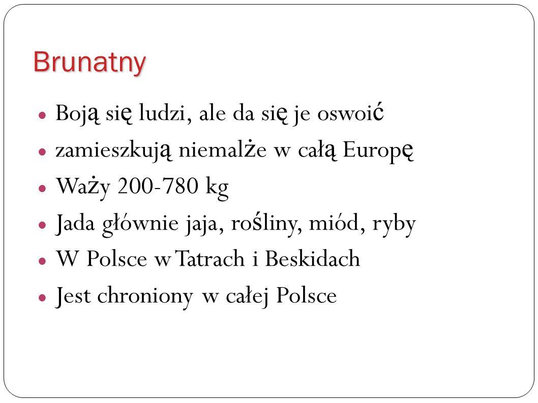 Brunatny Boj ą si ę ludzi, ale da si ę je oswoi ć zamieszkuj ą niemal ż e w cał ą Europ ę Wa ż y 200-780 kg Jada głównie jaja, ro ś liny, miód, ryby W Polsce w Tatrach i Beskidach Jest chroniony w całej Polsce