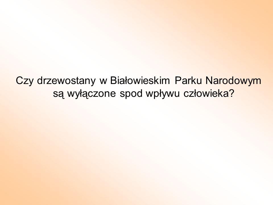 Czy drzewostany w Białowieskim Parku Narodowym są wyłączone spod wpływu człowieka?
