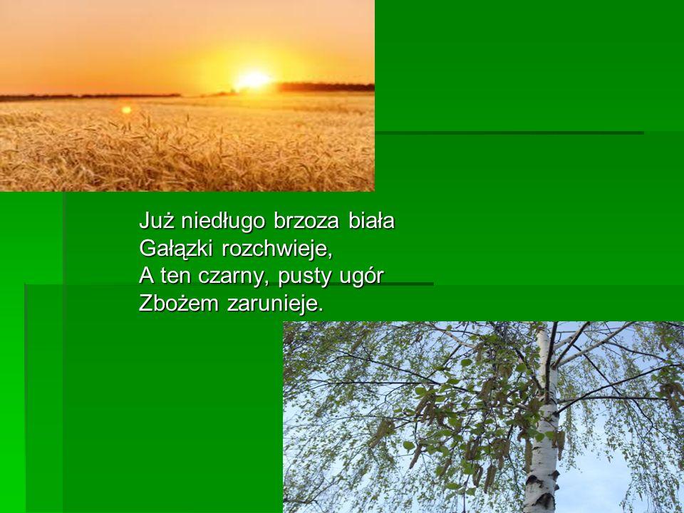 Już niedługo brzoza biała Gałązki rozchwieje, A ten czarny, pusty ugór Zbożem zarunieje.