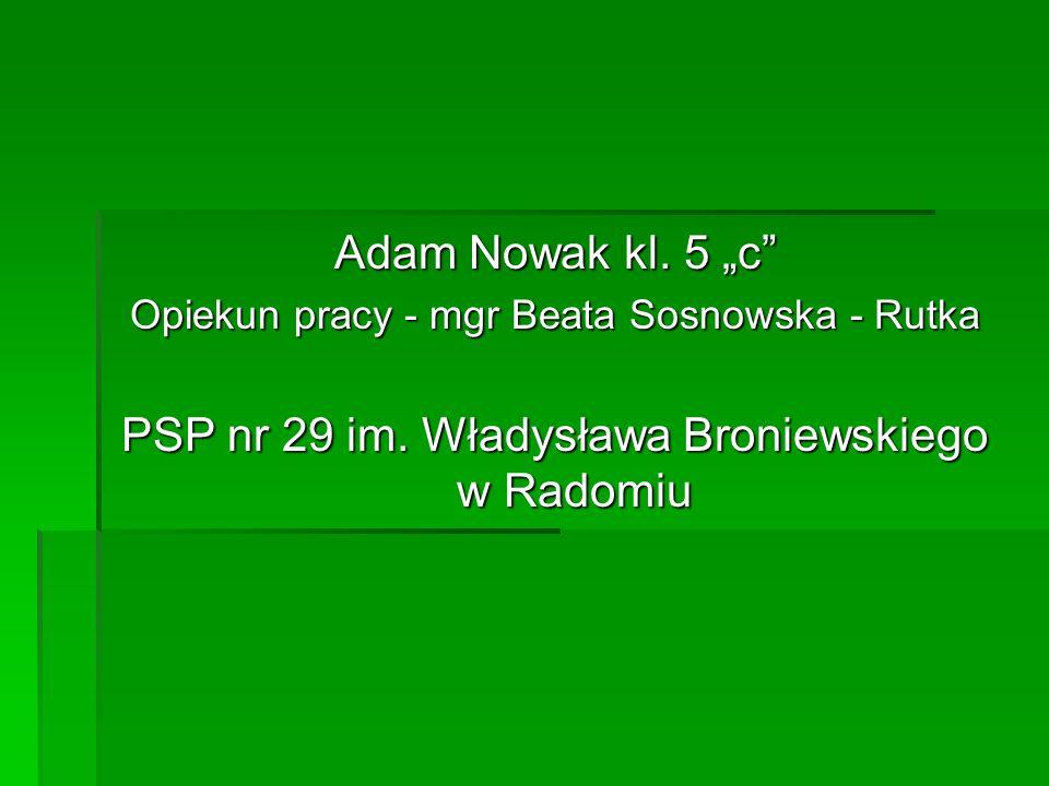 "Adam Nowak kl. 5 ""c Opiekun pracy - mgr Beata Sosnowska - Rutka PSP nr 29 im."