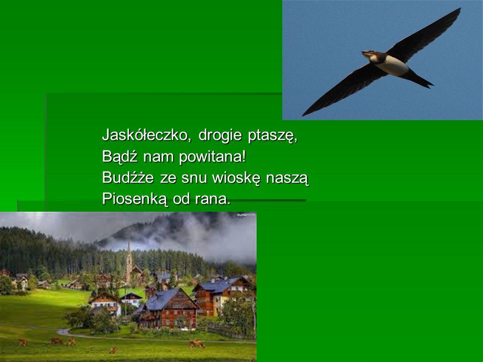 Jaskółeczko, drogie ptaszę, Bądź nam powitana! Budźże ze snu wioskę naszą Piosenką od rana.