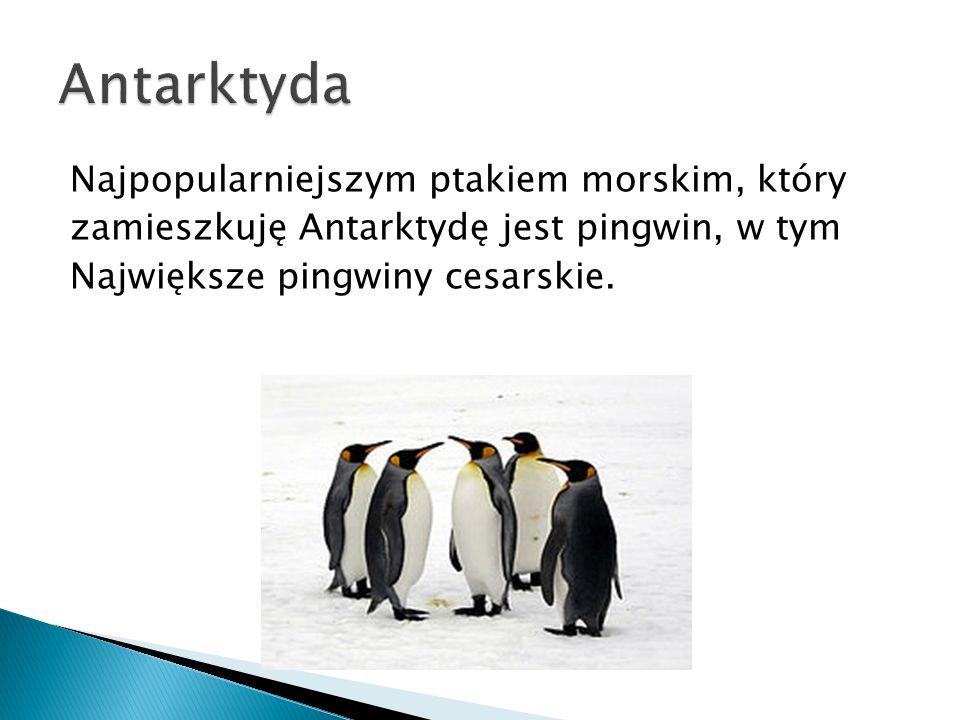 Najpopularniejszym ptakiem morskim, który zamieszkuję Antarktydę jest pingwin, w tym Największe pingwiny cesarskie.