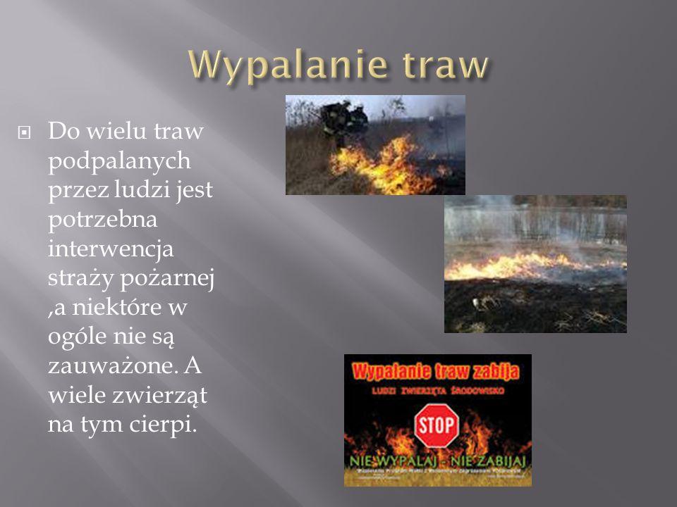  Do wielu traw podpalanych przez ludzi jest potrzebna interwencja straży pożarnej,a niektóre w ogóle nie są zauważone. A wiele zwierząt na tym cierpi