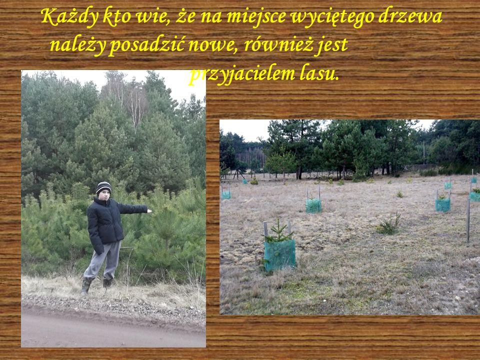 Każdy kto wie, że na miejsce wyciętego drzewa należy posadzić nowe, również jest przyjacielem lasu.