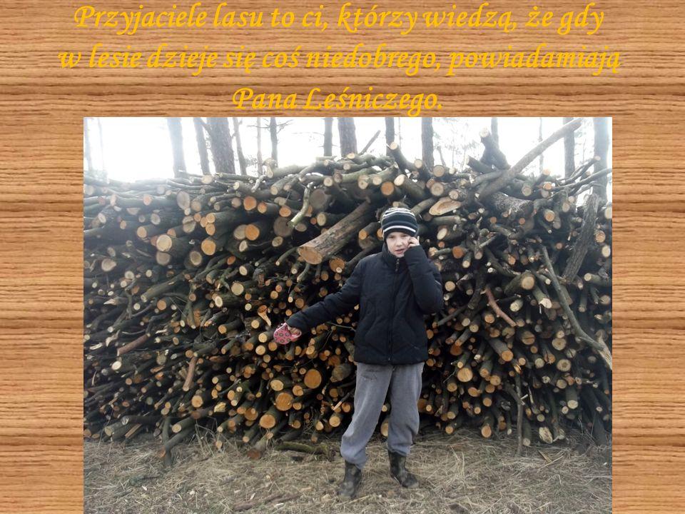 Przyjacielem lasu możemy nazwać każdego, kto wie, że w lesie należy zachowywać się cicho i spokojnie.