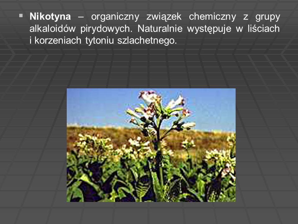   Nikotyna – organiczny związek chemiczny z grupy alkaloidów pirydowych. Naturalnie występuje w liściach i korzeniach tytoniu szlachetnego.