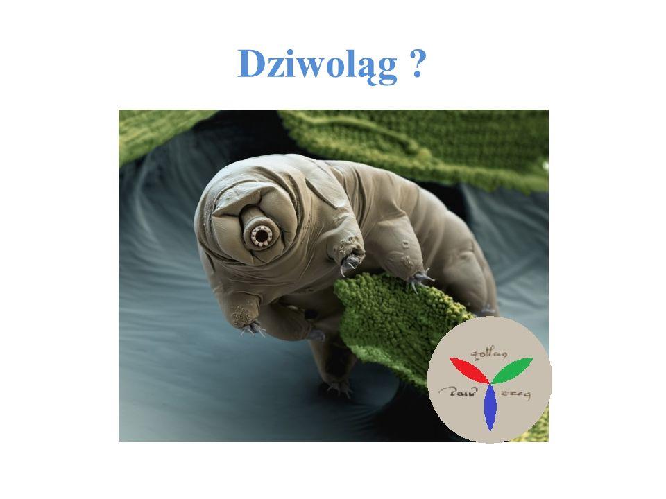 Ten numer redagowali: -Dagmara Łodziana (2D) -Patrycja Marć (2D) -Klaudia Maślanka (3C) - Patrycja Demkowicz (3C) -Tomek Marszałek (2A)