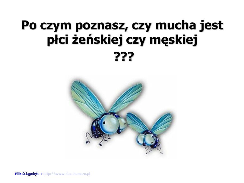Po czym poznasz, czy mucha jest płci żeńskiej czy męskiej ??.