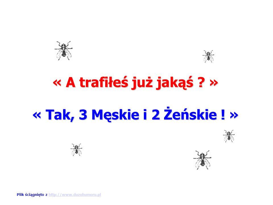 On odpowiada: « Zabijam muchy… » Plik ściągnięto z http://www.duzohumoru.plhttp://www.duzohumoru.pl