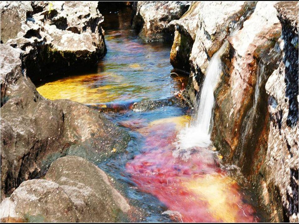"""Cano Cristales uważana za najpiękniejszą rzekę świata, """"rzekę która uciekła z raju""""."""