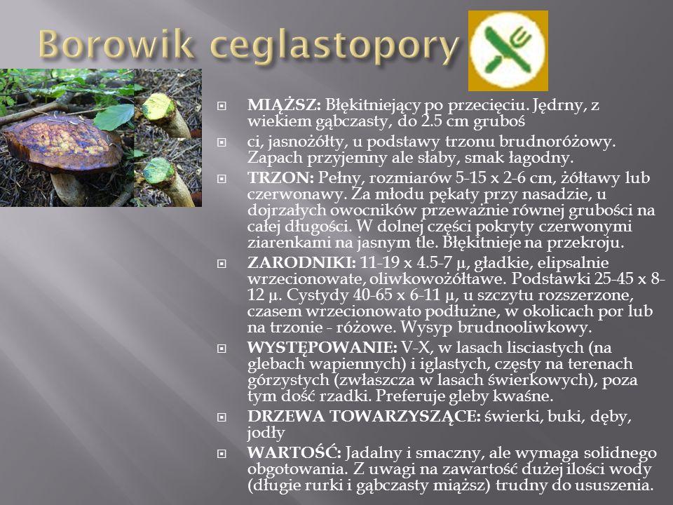  OWOCNIK: średnicy 0.5-1 cm, wysokości 0.5 - 1.2 cm, w młodości kulisty lub nieco cylindryczny, pilśniowato zamszowaty, żółtawy, brudnopomarańczowy do cynamonowego.