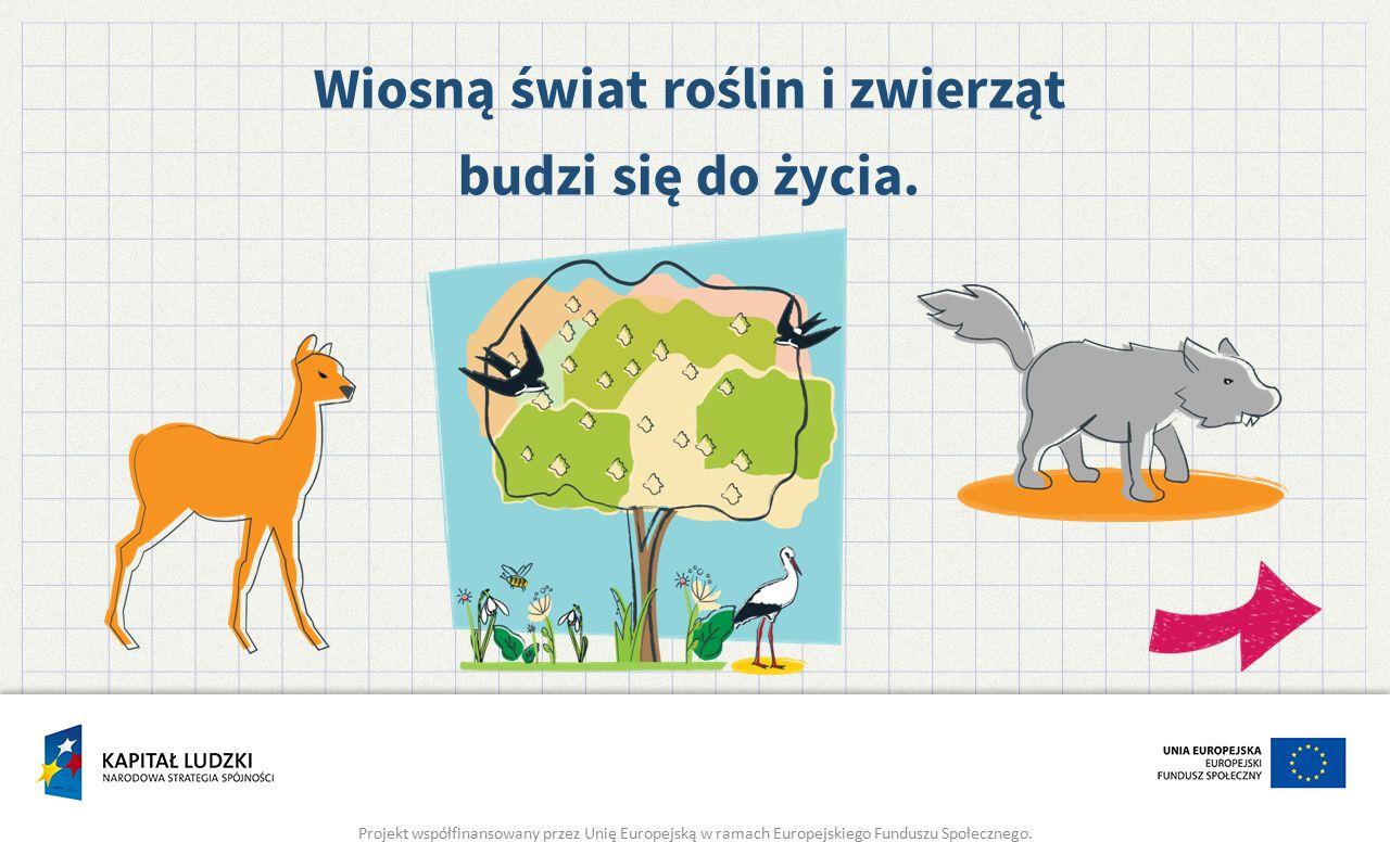 Wiosną świat roślin i zwierząt budzi się do życia. Projekt współfinansowany przez Unię Europejską w ramach Europejskiego Funduszu Społecznego.