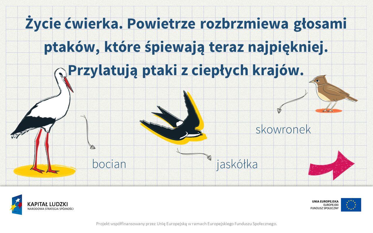 jaskółka Projekt współfinansowany przez Unię Europejską w ramach Europejskiego Funduszu Społecznego. Życie ćwierka. Powietrze rozbrzmiewa głosami ptak