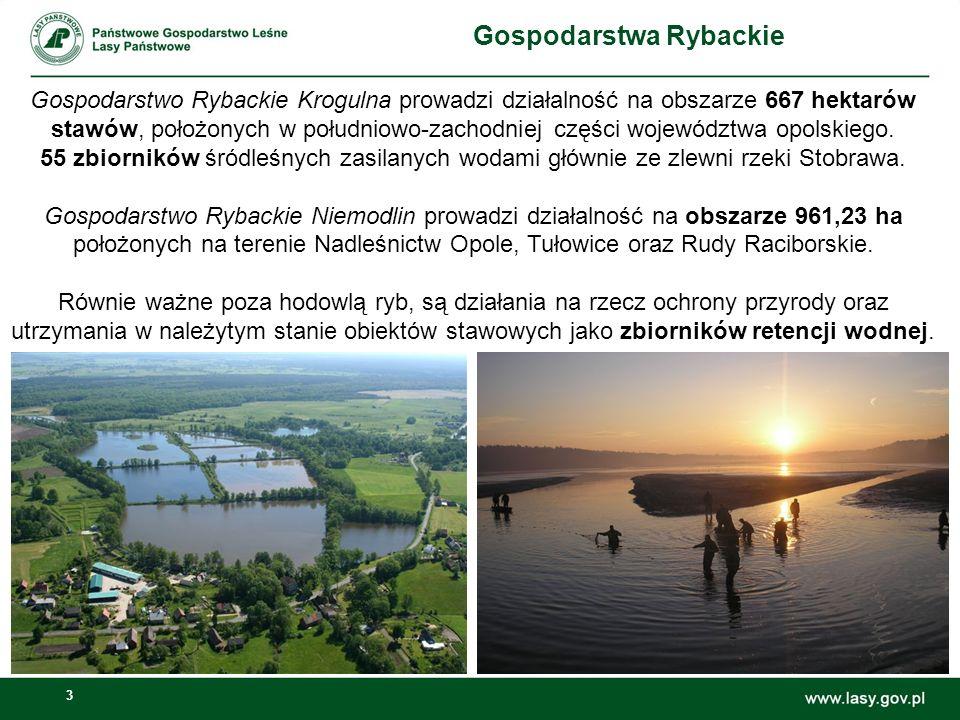 3 Gospodarstwa Rybackie Gospodarstwo Rybackie Krogulna prowadzi działalność na obszarze 667 hektarów stawów, położonych w południowo-zachodniej części województwa opolskiego.