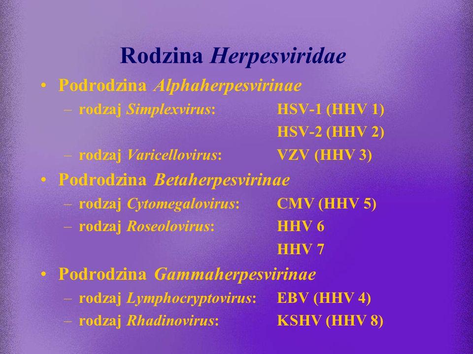Wirusy DNA chorobotwórcze dla człowieka Należą do rodzin: Herpesviridae Parvoviridae Poxviridae Hepadnaviridae Adenoviridae Papillomaviridae Poliomavi