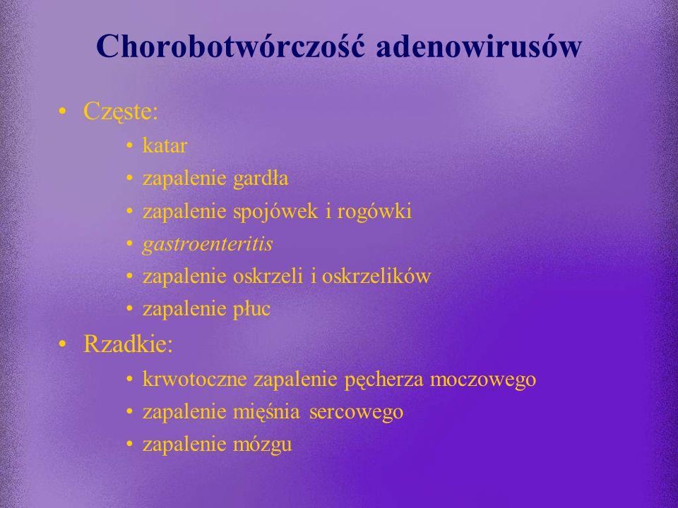 Patogeneza zakażeń adenowirusowych wniknięcie wirusa, namnożenie w komórkach nabłonka gardła wirus przenika do tkanki limfadenoidalnej gardła (zakażen