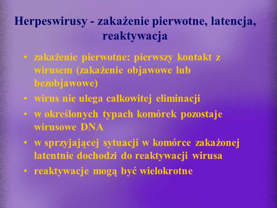 Replikacja herpeswirusów
