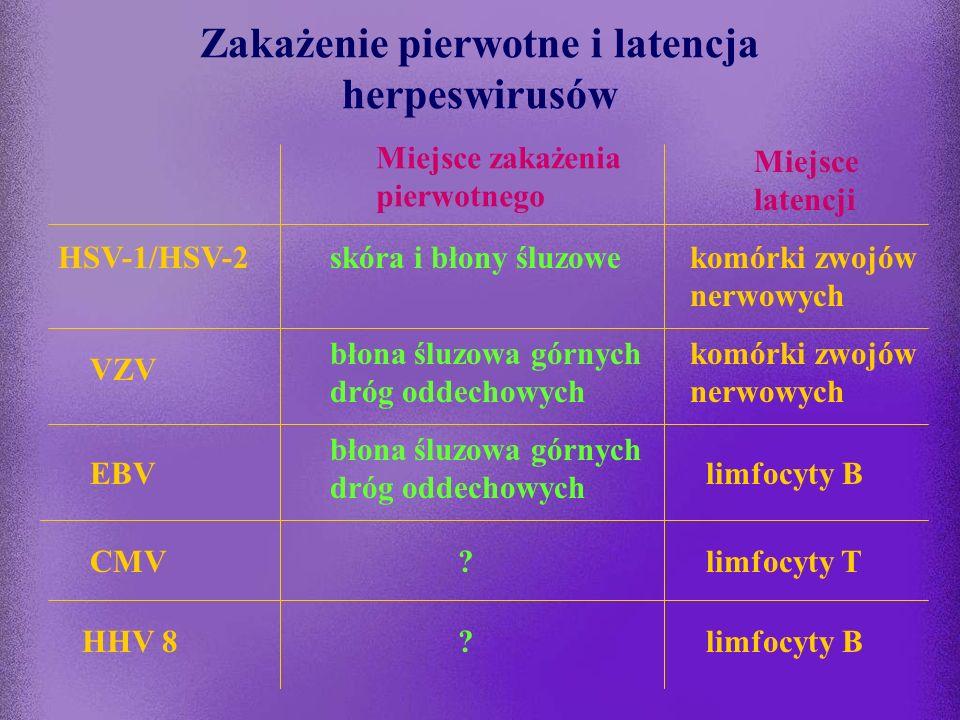 Herpeswirusy - zakażenie pierwotne, latencja, reaktywacja zakażenie pierwotne: pierwszy kontakt z wirusem (zakażenie objawowe lub bezobjawowe) wirus n