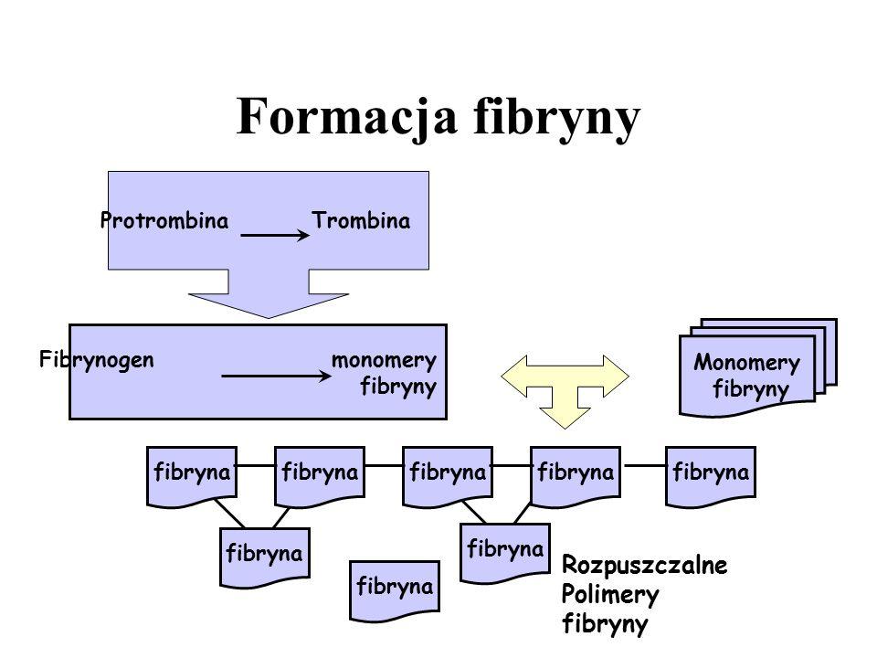 Monomery fibryny Protrombina Trombina Fibrynogen monomery fibryny Rozpuszczalne Polimery fibryny Formacja fibryny fibryna