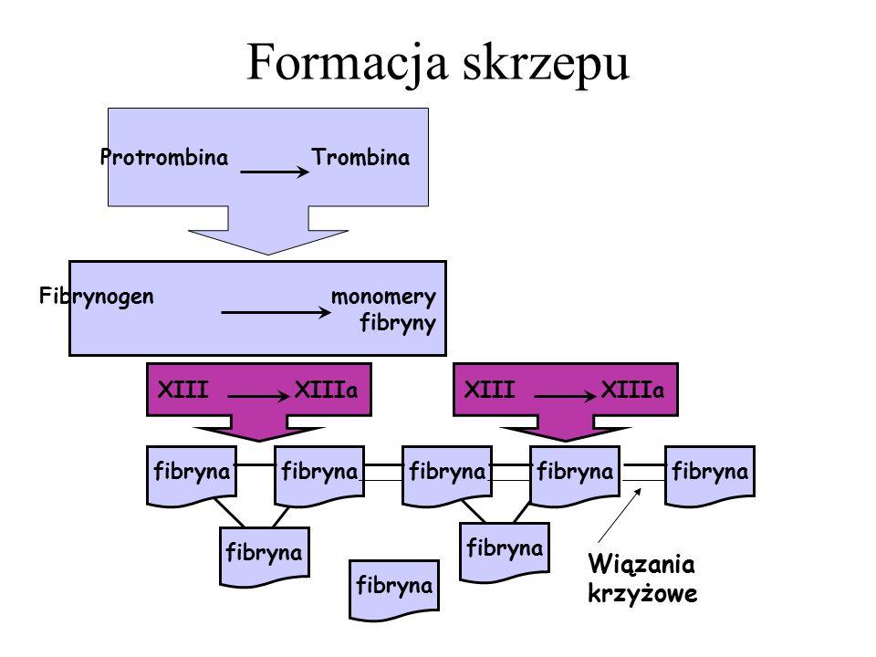 Protrombina Trombina Fibrynogen monomery fibryny Wiązania krzyżowe Formacja skrzepu fibryna XIII XIIIa