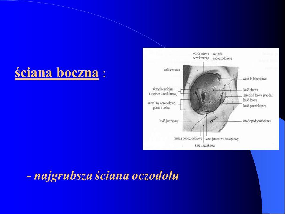 TWARDÓWKA (sclera) - siatka włókien łącznotkankowych przebiegających w różnych kierunkach, mało naczyń; -zadania : - chroni oko - kształt - napięcie - przechodzi w osłonkę twardą n.II - w odległości 5,5 – 7,5 mm od rąbka rogówki – przyczepy mięśni za równikiem mm.skośne