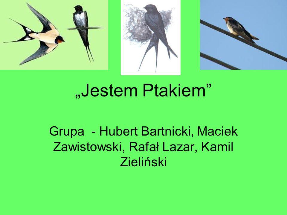 """""""Jestem Ptakiem"""" Grupa - Hubert Bartnicki, Maciek Zawistowski, Rafał Lazar, Kamil Zieliński"""