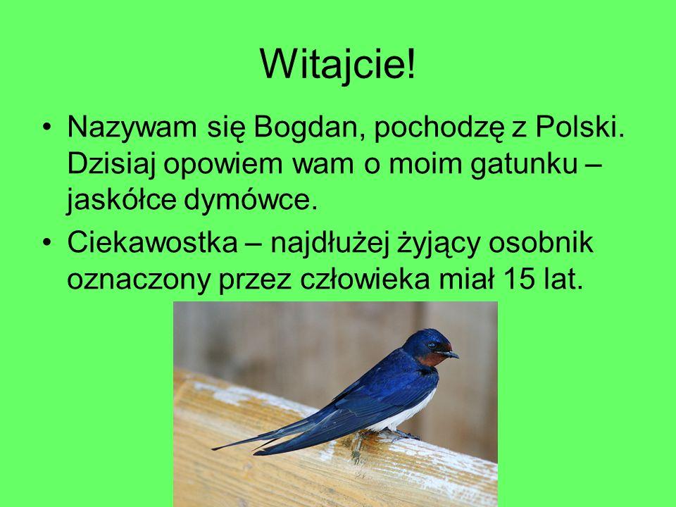 Witajcie! Nazywam się Bogdan, pochodzę z Polski. Dzisiaj opowiem wam o moim gatunku – jaskółce dymówce. Ciekawostka – najdłużej żyjący osobnik oznaczo