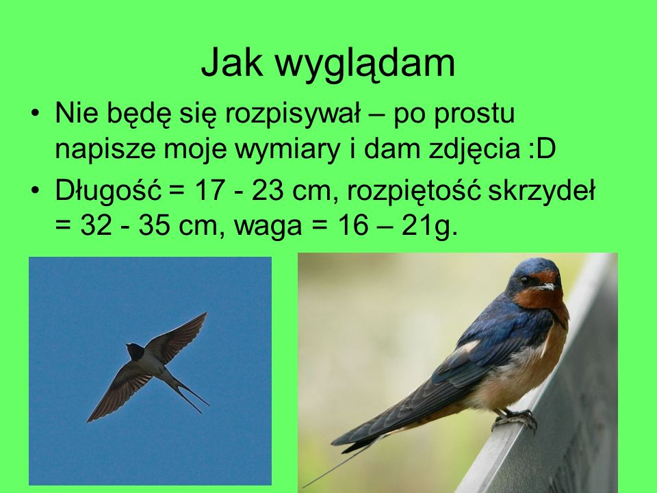 Jak wyglądam Nie będę się rozpisywał – po prostu napisze moje wymiary i dam zdjęcia :D Długość = 17 - 23 cm, rozpiętość skrzydeł = 32 - 35 cm, waga =