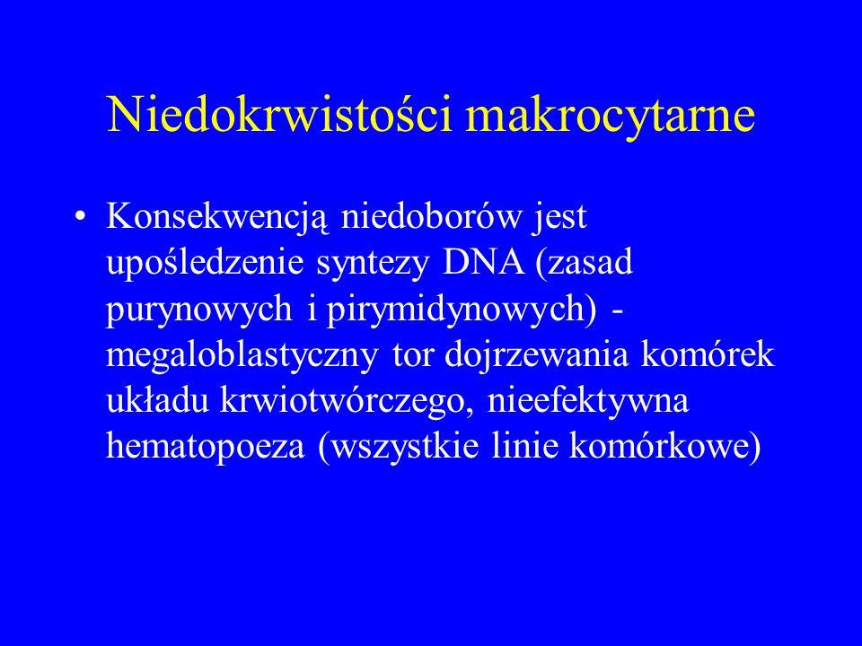 Niedokrwistości makrocytarne Konsekwencją niedoborów jest upośledzenie syntezy DNA (zasad purynowych i pirymidynowych) - megaloblastyczny tor dojrzewania komórek układu krwiotwórczego, nieefektywna hematopoeza (wszystkie linie komórkowe)