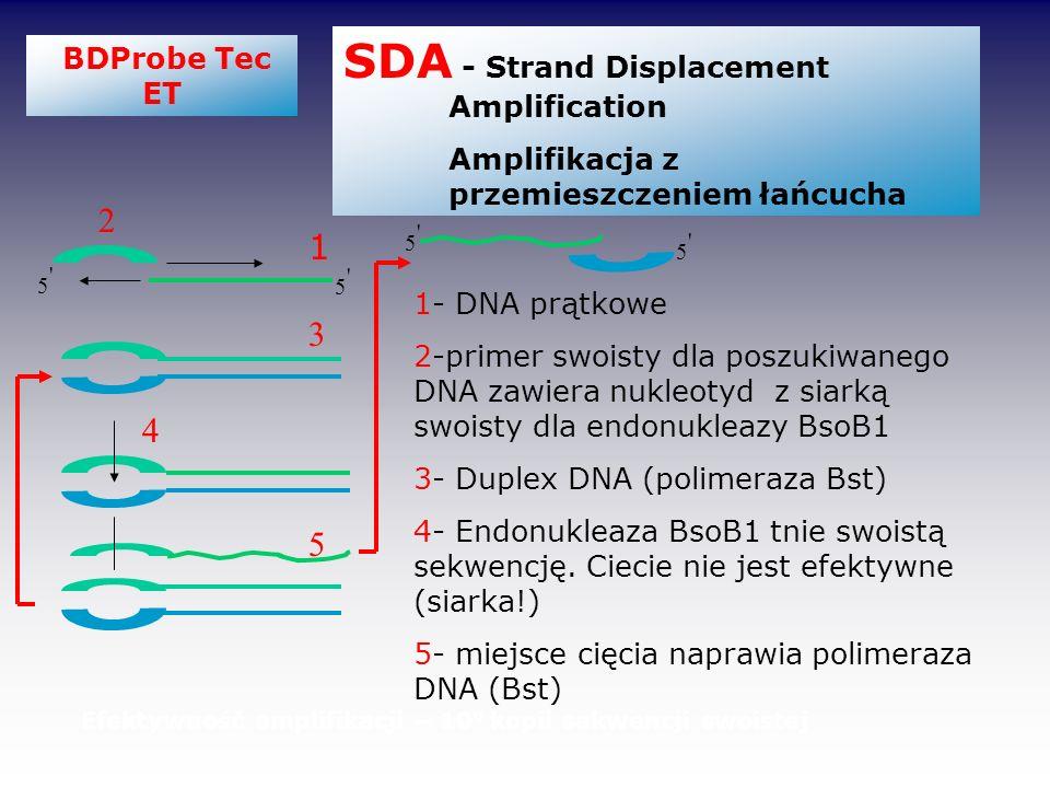 BDProbe Tec ET SDA - Strand Displacement Amplification Amplifikacja z przemieszczeniem łańcucha 1 2 3 4 5 1- DNA prątkowe 2-primer swoisty dla poszuki