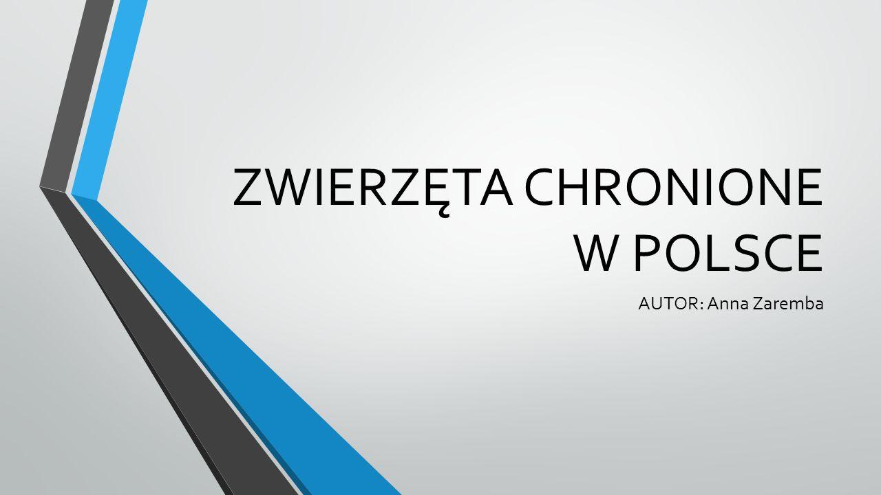 ZWIERZĘTA CHRONIONE W POLSCE AUTOR: Anna Zaremba