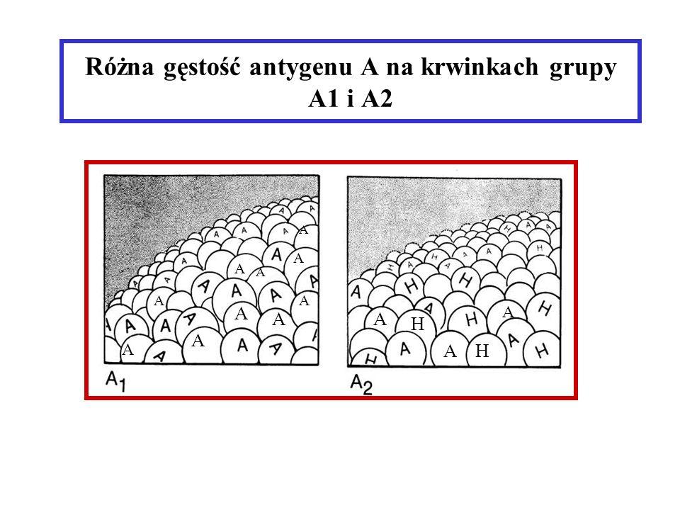 Różna gęstość antygenu A na krwinkach grupy A1 i A2 A AA A A A A A A A A A AH H