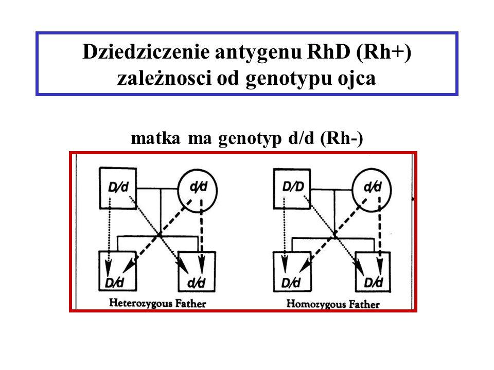 Dziedziczenie antygenu RhD (Rh+) zależnosci od genotypu ojca matka ma genotyp d/d (Rh-)