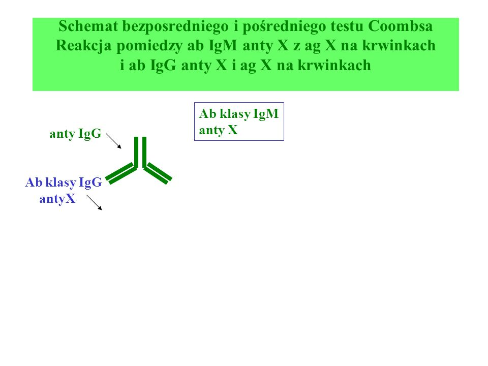 Schemat bezposredniego i pośredniego testu Coombsa Reakcja pomiedzy ab IgM anty X z ag X na krwinkach i ab IgG anty X i ag X na krwinkach anty IgG Ab klasy IgG antyX Ab klasy IgM anty X