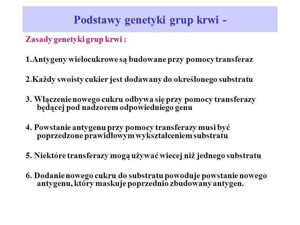 Podstawy genetyki grup krwi - Zasady genetyki grup krwi : 1.Antygeny wielocukrowe są budowane przy pomocy transferaz 2.Każdy swoisty cukier jest dodawany do określonego substratu 3.
